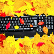 Autumn keyboard — Stock Photo #2794395