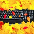 Autumn keyboard — Stock fotografie