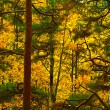 Autumn forest background — Foto de Stock