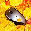 Autumn mouse - Stock Photo