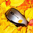 Stock Photo: Autumn mouse