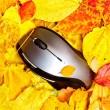 topo d'autunno — Foto Stock