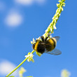 Stock Photo: Bee