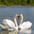 Swans — Stock Photo #2795088