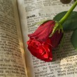 Red rose — Stockfoto #2795111