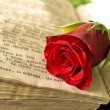 Red rose — Stock Photo #2795129
