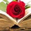 Open book with rose — Stock Photo