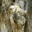 Old wood trunk — Stock Photo #2795923