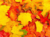Autumn leaves background — 图库照片