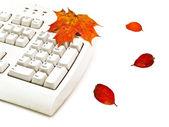 Autumn keyboard — Stock Photo
