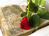 Rose at book — Stock Photo