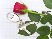 Rose and key — Stock Photo