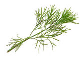 Green dill — Stock Photo