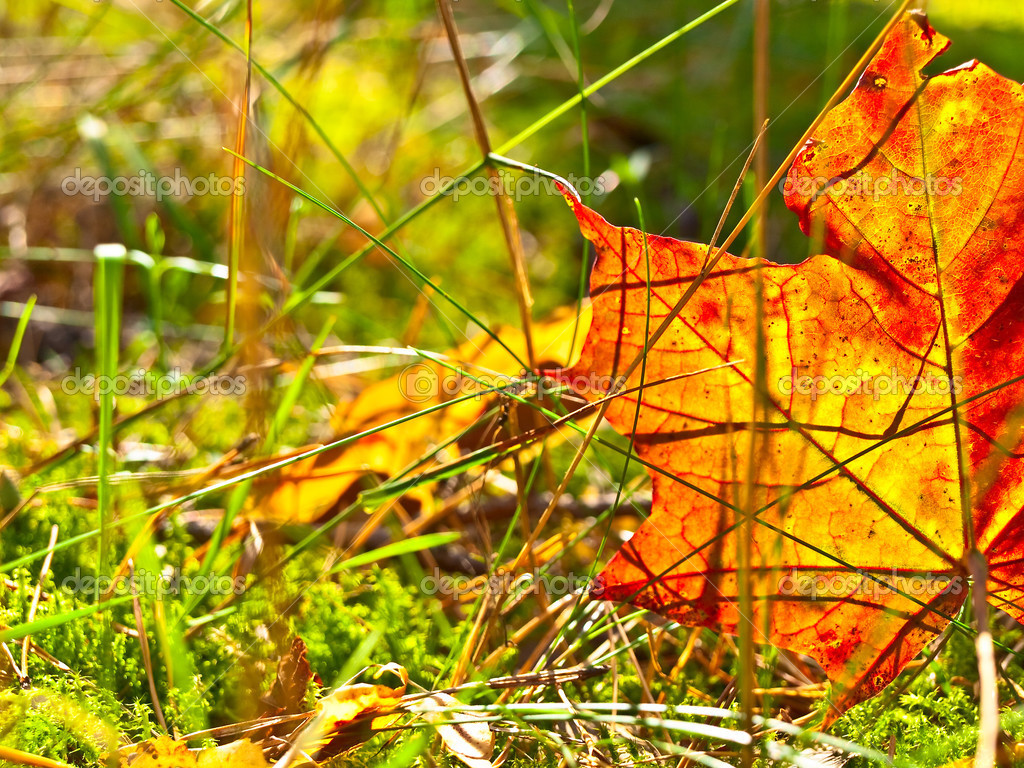Autumn orange leaf in the green grass — Stock Photo #2793808