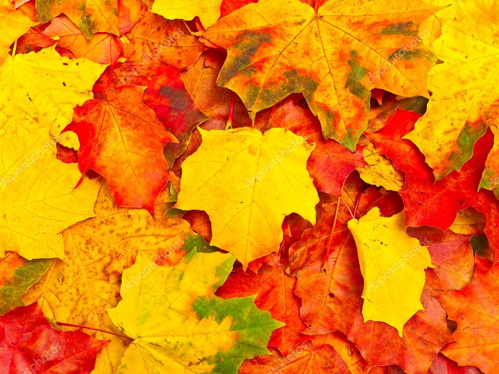 Photo of the autumn leaves background — Photo #2793872