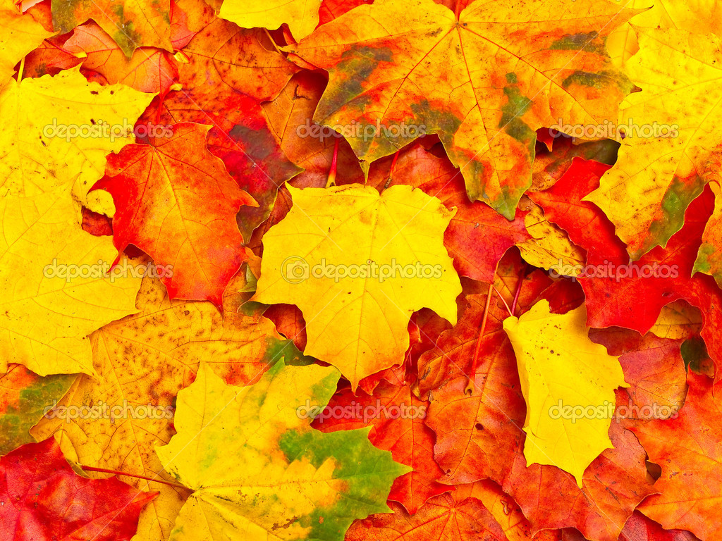 Photo of the autumn leaves background — Стоковая фотография #2793872