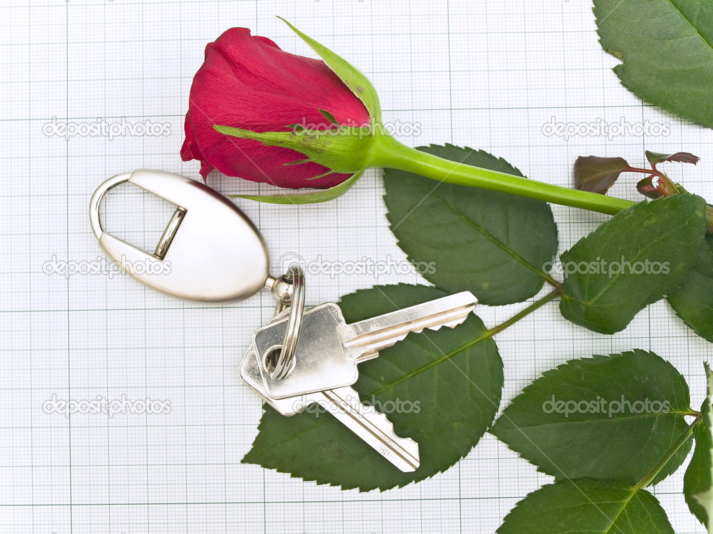 Red rose and key at the plotting paper — Stock Photo #2795755