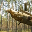 Fallen tree in forest — Stock Photo
