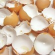 Eggshel - Stock Photo