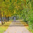 Autumn alley — Stockfoto