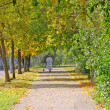 Stock Photo: Autumn alley