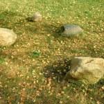 Stones — Stock Photo #2954464