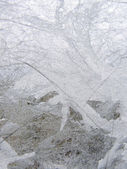 Frost glass — Stock Photo