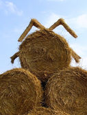 Sheaf of hay — Stock Photo