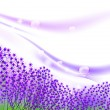 Lavender inspiration - Imagens vectoriais em stock