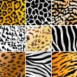 Wild patterns - Stock Vector