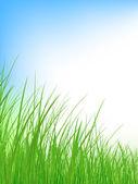 Trawa łąka — Wektor stockowy
