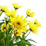 Flower — Stock Photo #3262134