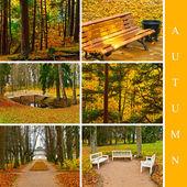 Autumn set — Stock Photo