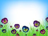 Summer meadow — Stock Vector