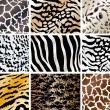 Set of animals skin backgrounds - Stok Vektör