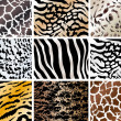 Set of animals skin backgrounds - Stock vektor