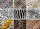 Set of animals skin backgrounds — Wektor stockowy