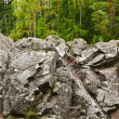 Rocks in the forest - Stock Photo