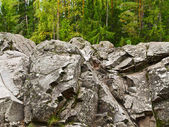 Rocks in the forest — Stock Photo