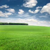 Background of sky and grass — Stock Photo