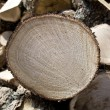 Stock Photo: Sliced oak fire wood