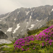 Spring in the mountains — Stock Photo