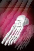 Foot skeleton — Stock Photo