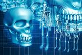 Skelett och människans kranium — Stockfoto