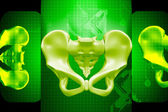 Digital illustration of human pelvis in color background — Stock Photo