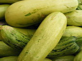 Zucchini — Photo