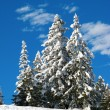 Stock Photo: Winter in alps