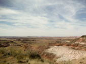 Petrified Forest and the Horizon — Stock Photo