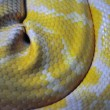 Yellow snakeskin — Stock Photo #4717952