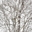 Snowstorm Trees — Stock Photo #5073073